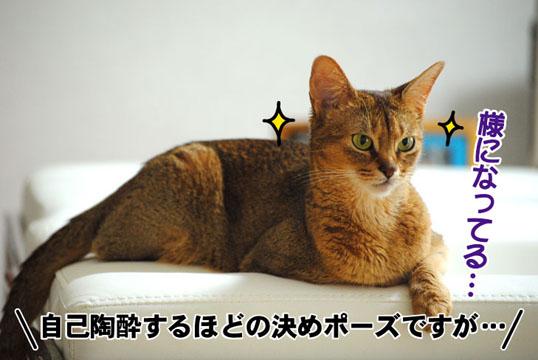 20110626_01.jpg