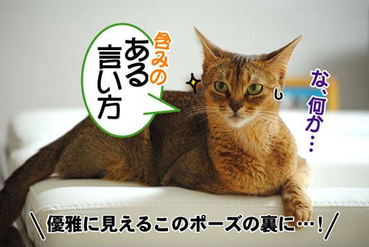 20110626_02.jpg