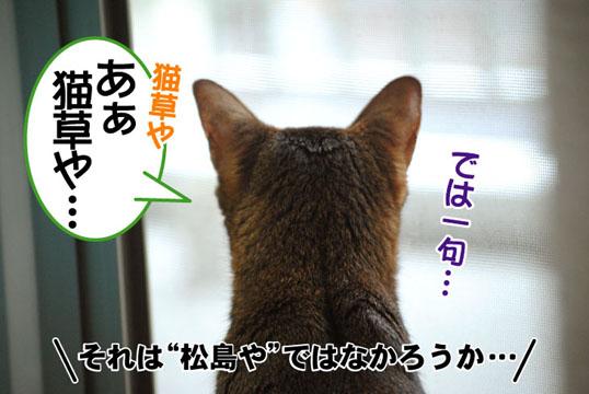 20110628_04.jpg