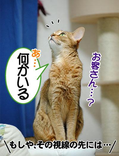 20110629_01.jpg