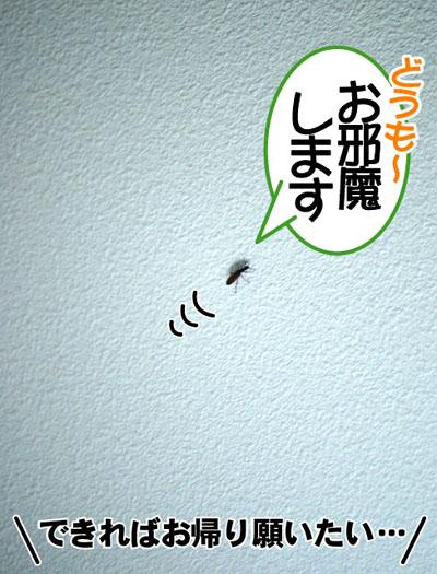 20110629_02.jpg