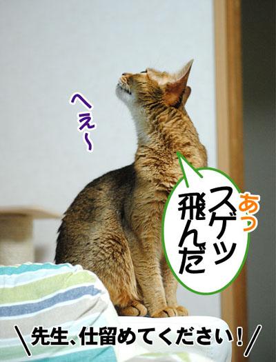 20110629_04.jpg