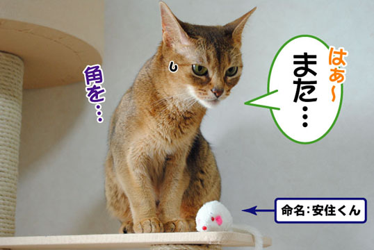 20110701_01.jpg