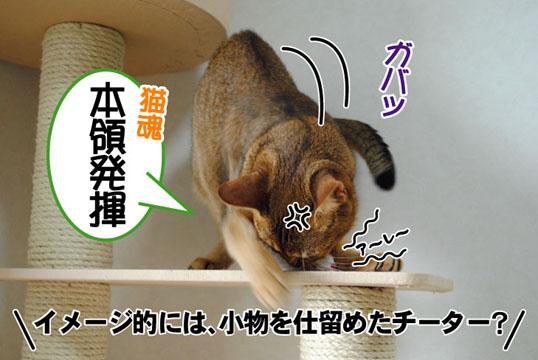 20110701_04.jpg
