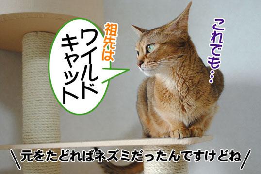20110701_05.jpg