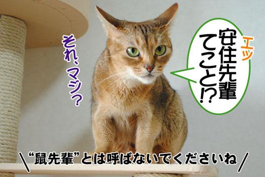 20110701_06.jpg
