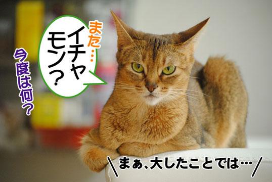 20110704_01.jpg