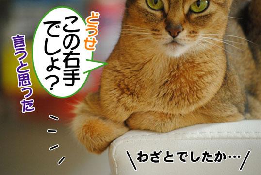 20110704_02.jpg