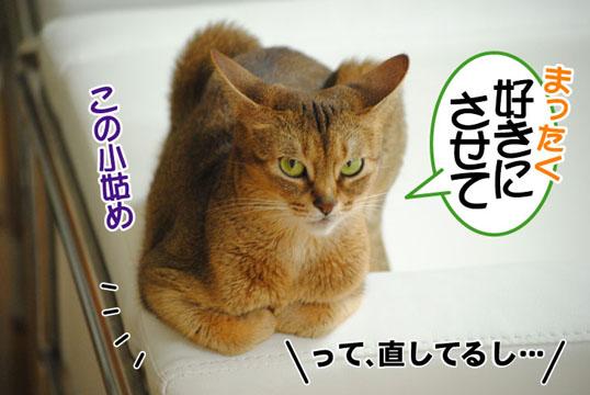 20110704_03.jpg