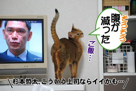 20110705_01.jpg