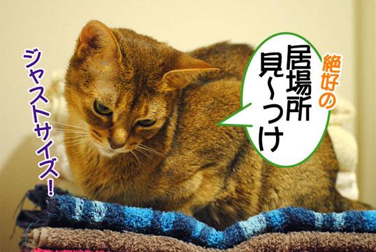 20110706_01.jpg