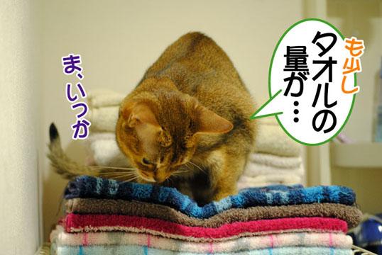 20110706_02.jpg
