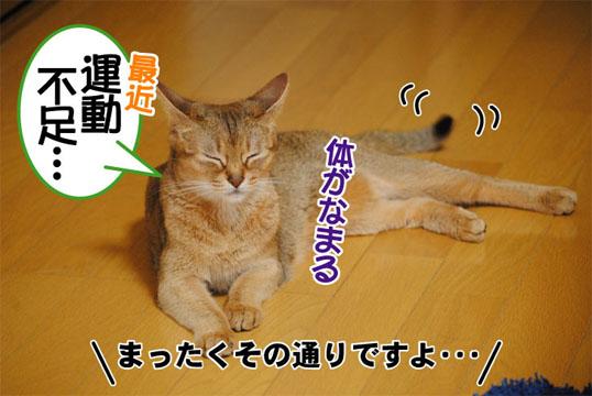 20110707_02.jpg