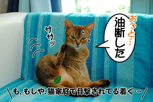 20110709_02.jpg