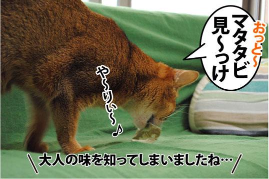 20110715_01.jpg
