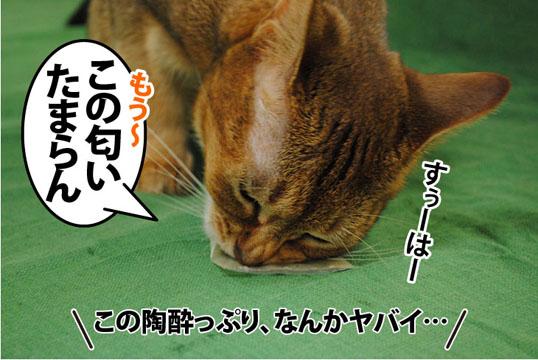 20110715_02.jpg