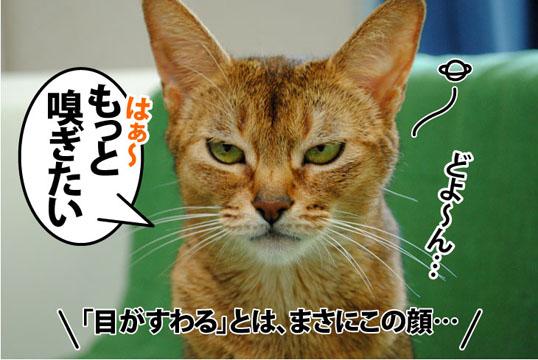 20110715_04.jpg