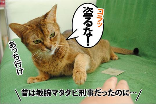 20110715_05.jpg