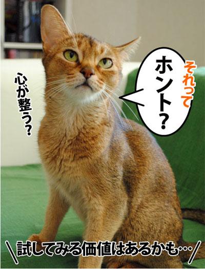 20110716_03.jpg