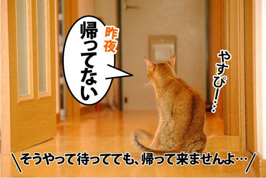 20110720_01.jpg