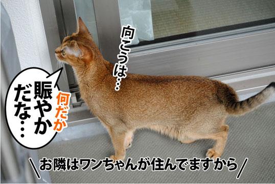 20110722_03.jpg