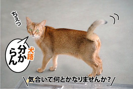 20110722_04.jpg
