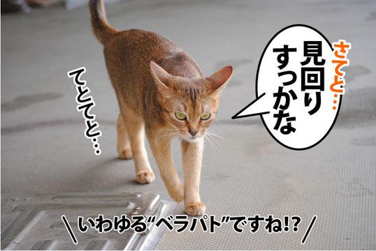 20110728_01.jpg