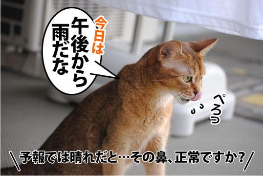 20110728_03.jpg