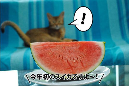 20110729_01.jpg