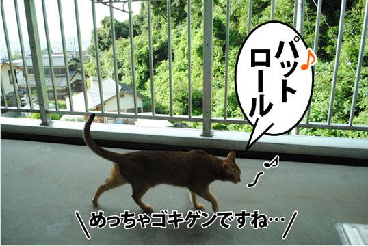20110729_04.jpg