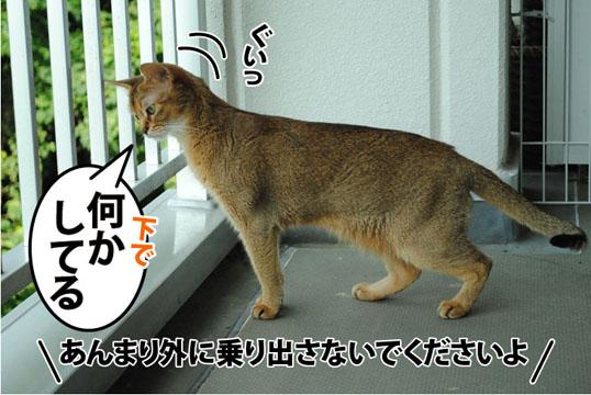 20110729_05.jpg