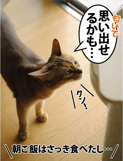 20110731_04.jpg
