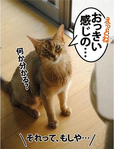 20110731_05.jpg