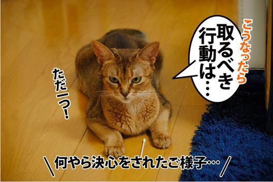 20110801_03.jpg