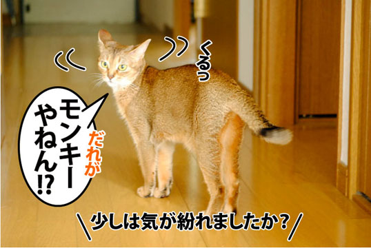 20110801_05.jpg