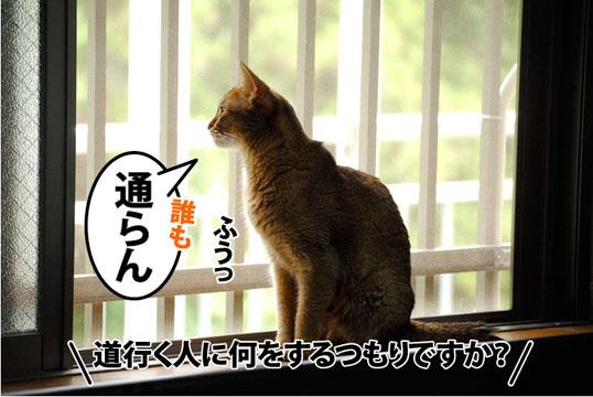 20110802_01.jpg