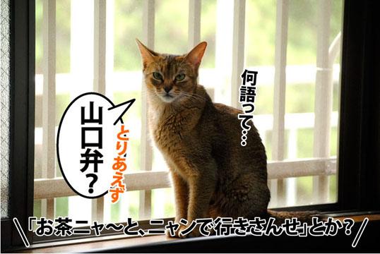 20110802_03.jpg