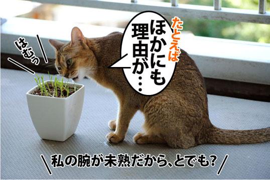 20110803_04.jpg