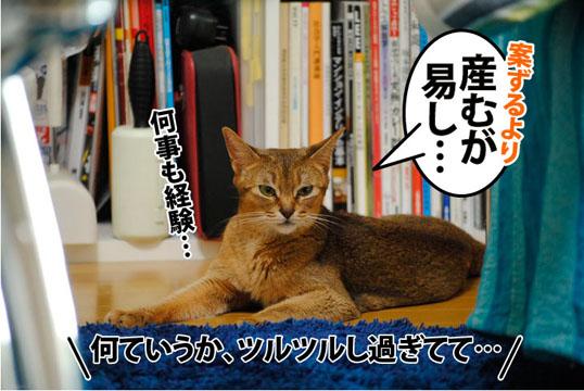 20110804_03.jpg