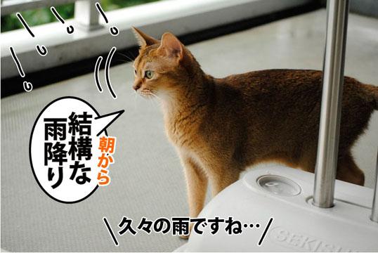 20110806_01.jpg