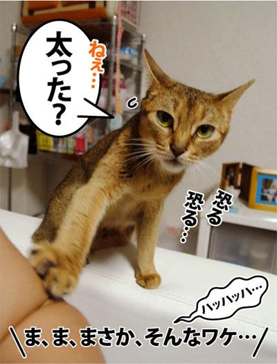 20110808_01.jpg