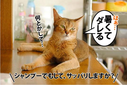 20110810_02.jpg