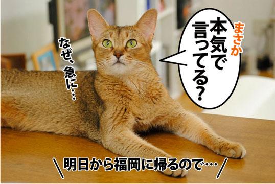 20110810_04.jpg