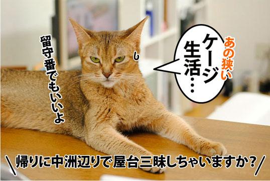 20110810_05.jpg