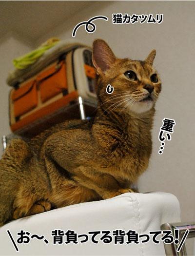 20110811_01.jpg
