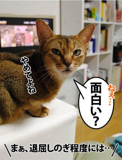 20110811_02.jpg