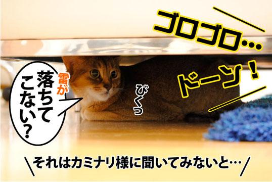 20110817_01.jpg