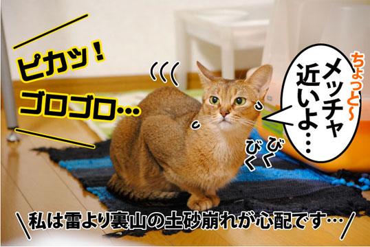 20110817_02.jpg