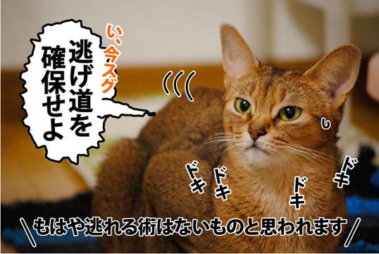 20110817_03.jpg