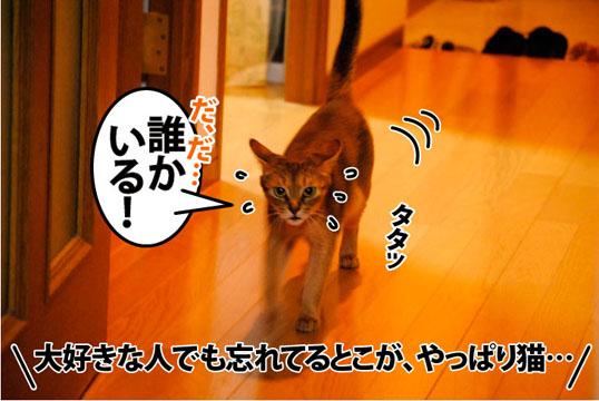 20110818_01.jpg
